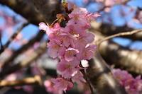 早春の伊豆 1 - フォト・フレーム  - 四季折々 -