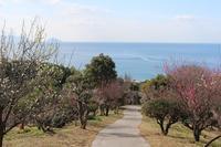 梅が咲いたよ 桜も咲いた 〜山口県・光市&下松市〜 - ある日ある時