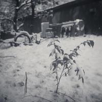 最後の雪と戯れる農学部のリヤカー - Film&Gasoline