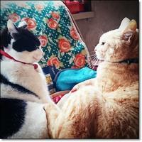 猫の日の手術 - なのねこ夢気分