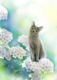 ゴロニャングレイの肖像 - ♪天使たちの優雅な生活♪