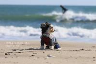 ソラマメの笑顔??? (冬の海で♪・Ⅳ) - FUNKY'S BLUE SKY
