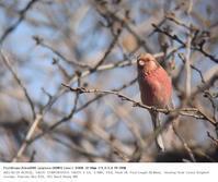 さくら草公園 2017.2.19(3) - 鳥撮り遊び
