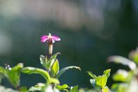 春の足音♪ - HANA 花♪日記