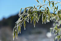 冬の七夕 - 源爺の写真館