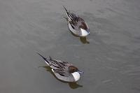 鎌倉の水鳥たち - 満足満腹  お茶とごはん