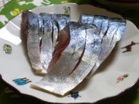 青魚三昧 - ダックと隊長
