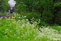 白い花の咲く頃 - 蒸気をおいかけて・・・少年のように