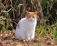 ネコの日のネコとシメ - 星の小父さまフォトつづり