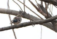 初めての撮影 - 野鳥がいるから
