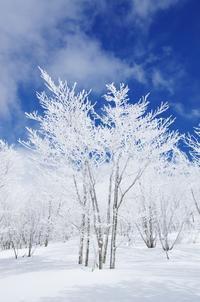 白くそびえる - 自然と仲良くなれたらいいな2