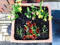 今月の花 2月 - Healing Garden  ー草庭ー