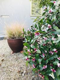 春のスイッチ♪ - Healing Garden  ー草庭ー