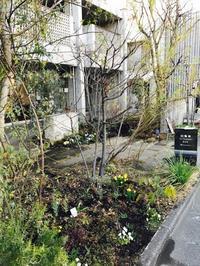 Keyaki Garden 0216 - Healing Garden  ー草庭ー