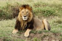 主にライオン、そしてオレンジ色の夕陽(マサイマラに到着して最初のサファリ) - 旅プラスの日記
