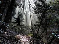 裏山歩き - 老猿の山日記