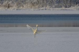 今朝のウトナイ湖・・・エゾリーが心配・・・(T△T) - やぁやぁ。