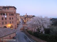 シエナの裏道で見つけた春の訪れ - イタリアワインのこころ