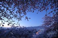 第19回まつだ桜まつり 河津桜 - photograph3