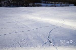 足あとの主は・・・ - ekkoの --- four seasons --- 北海道