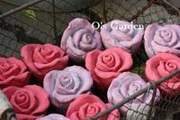 新着鉢のおしらせ ♪ - O's garden へ ようこそ~ ♪
