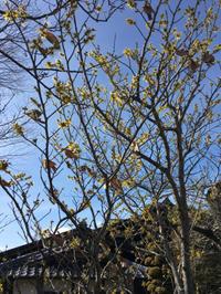 春の兆し - 三楽 sanraku 造園設計・施工・管理 樹木樹勢診断・治療