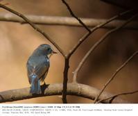 秋ヶ瀬公園・野鳥園 2017.2.19(4) - 鳥撮り遊び