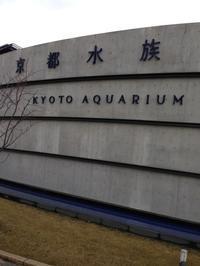 京都水族館にいざ避難だ - 音作衛門道楽日記