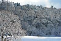 雪の朝 - 源爺の写真館