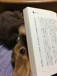 本の横から犬! - きょうのはなwithくるみ~愛犬写真日記~