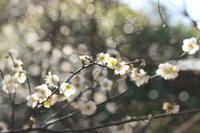 梅の花☆2 葛西臨海公園 - Let's Enjoy Everyday!