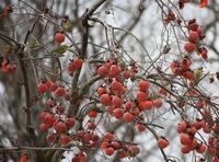 万願寺の森で探鳥会 2017/02/02 - 万願寺通信