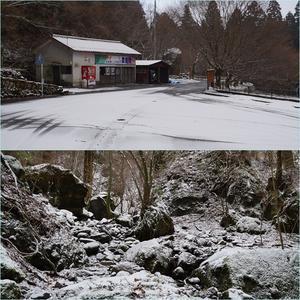 春雪の英彦山へ・・・開花し始めた春の妖精達。 - そうだ!山に登ろう