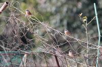 驚愕のイタチ&カワセミペアの儀式 - 野鳥写真日記 自分用アーカイブズ
