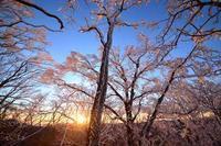 ピンク色の日の出  明神岳 - 峰さんの山あるき