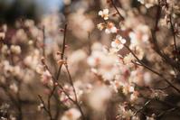 掬月亭と梅の花 - ぽとすのくずかご