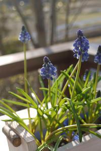 夕日を浴びるデッキの花たち - CROSSE 便り