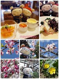 早春の鎌倉&江ノ島 その3 - ぶうぶうず&まよまよの癒しの日記