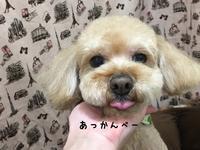 店長の日記〜埋れ写真たち〜 - トリミングサロンオリーブスタッフ日記