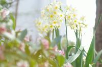 ご近所の小さな春~団地の花壇もいけてます! - 柳に雪折れなし!Ⅱ