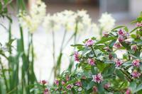 ご近所の小さな春~木々の花も春模様 - 柳に雪折れなし!Ⅱ