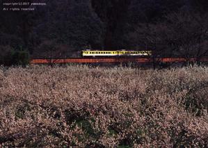 梅の里を彩る ~追憶の可部線 - ローカル鉄道散歩