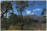 梅香る庭園 -  one's  heart