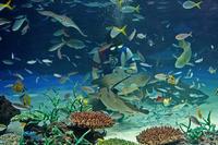 サンシャイン水族館~「サンシャインラグーン」:サメたちとウツボの舞 - 続々・動物園ありマス。