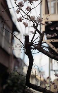 月島小路散策⑷ - 心のカメラ / more tomorrow than today ...