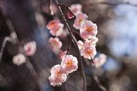 EF50mm F1.8 STMで撮ってみた 清水公園で梅のお花見 - Full of LIFE