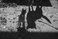 shadow (4cut) -     ~風に乗って~    Present