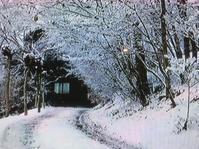 ダイアリー オーレリアンの庭を見て - 散歩ガイド