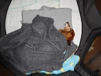 枕が自動で移動するように自動でふんが取れたらイイ - うまうまひんひん
