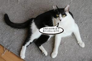 センターから新入りさん - 保護猫さんのご縁探し